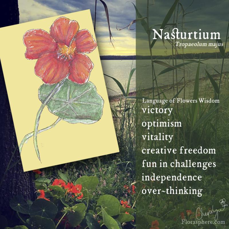 Nasturtium new webcards photo 2
