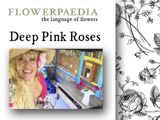 Deep pink roses banner