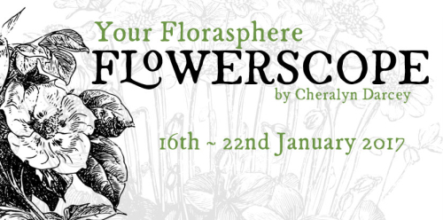 Flowerscope 16th Jan