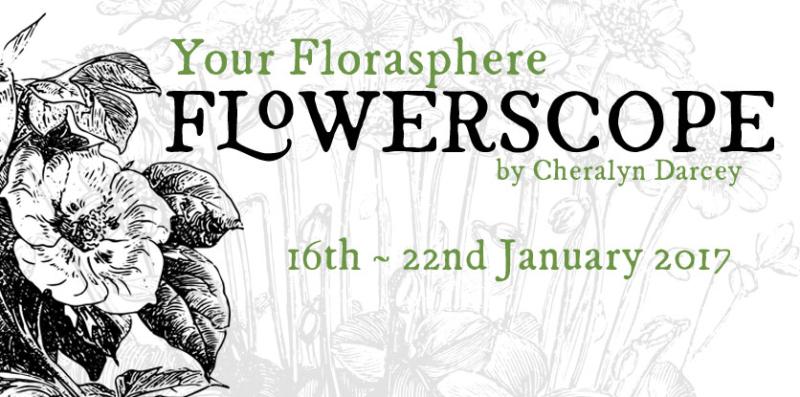 Flowerscope 16th Jan