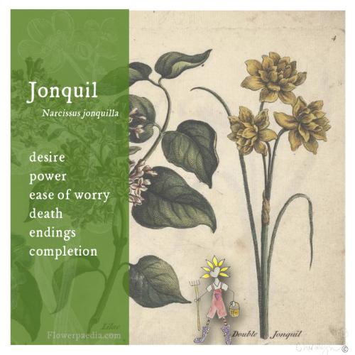 Webcards jonquil vintage flora