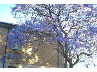4992502-Balmain_Watch_House_Sydney