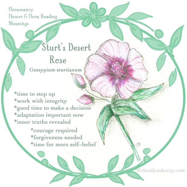 Web card sturt's desert rose