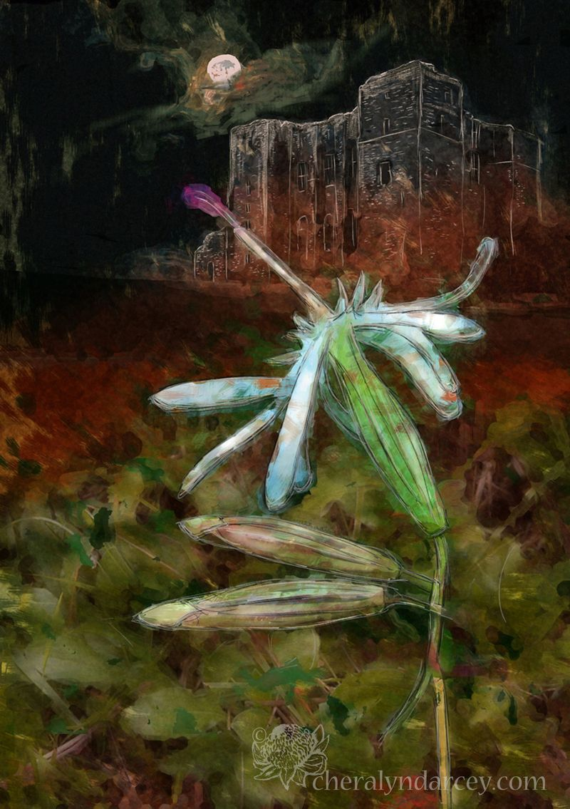 WEB light Flowers of the Night ~ Nottingham Catchfly copy