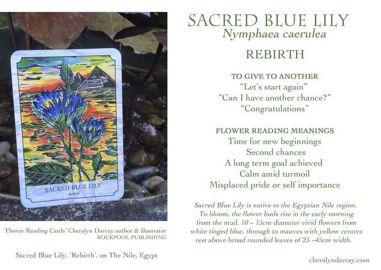 WEB Sacred Blue Lily