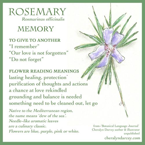 WEB CARDS Rosemary 4