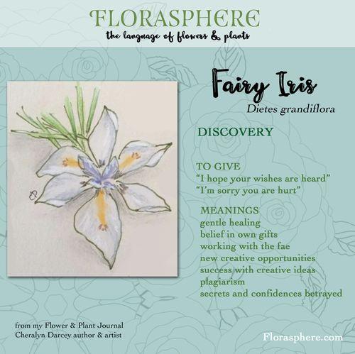 Webcards fairy iris