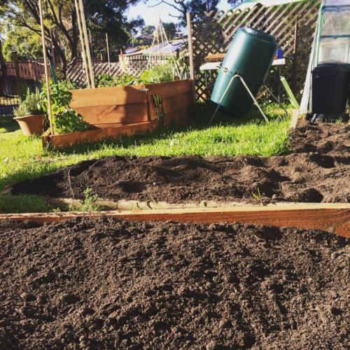 planting winter crops