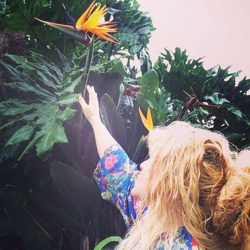 Cheralyn bird of paradise