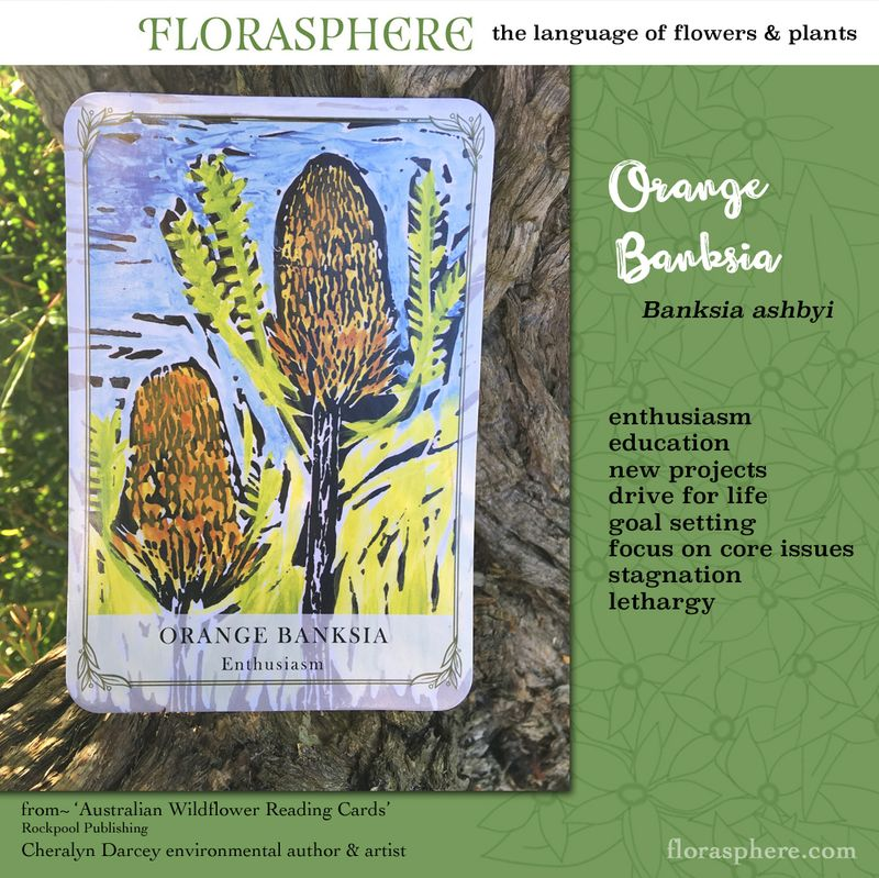 Orange banksia webcards