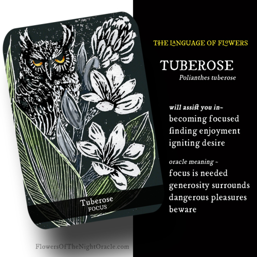 Night webcards tuberose