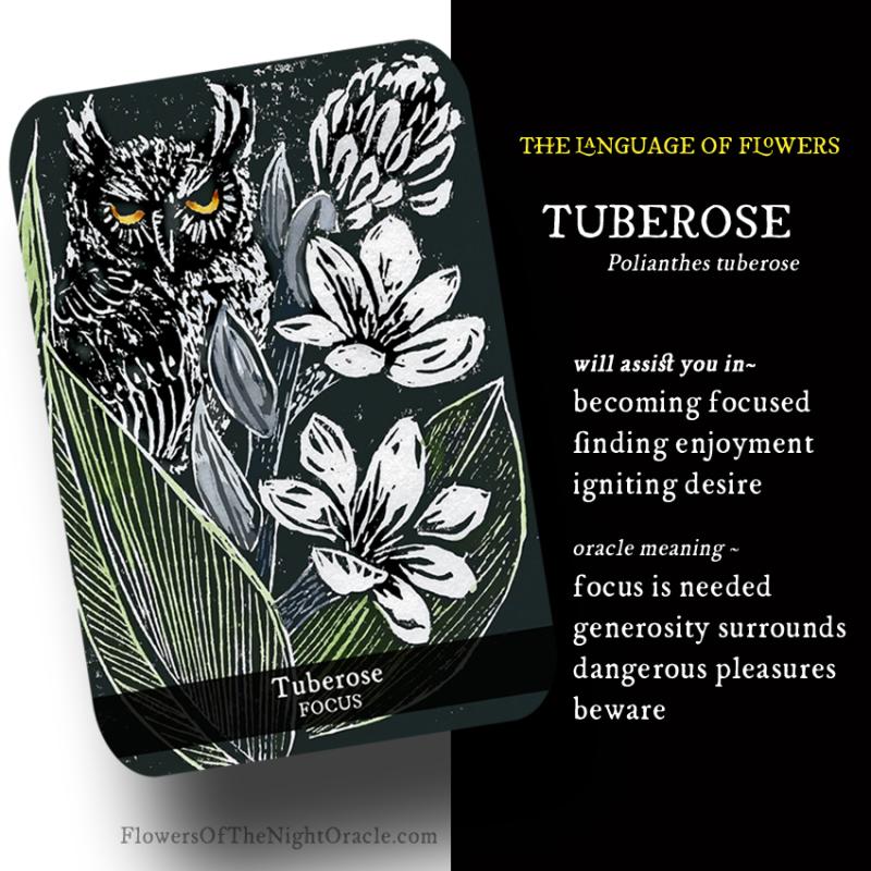 Night webcards tuberose