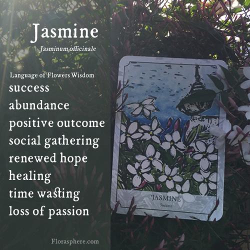 Jasmine new photo wecards