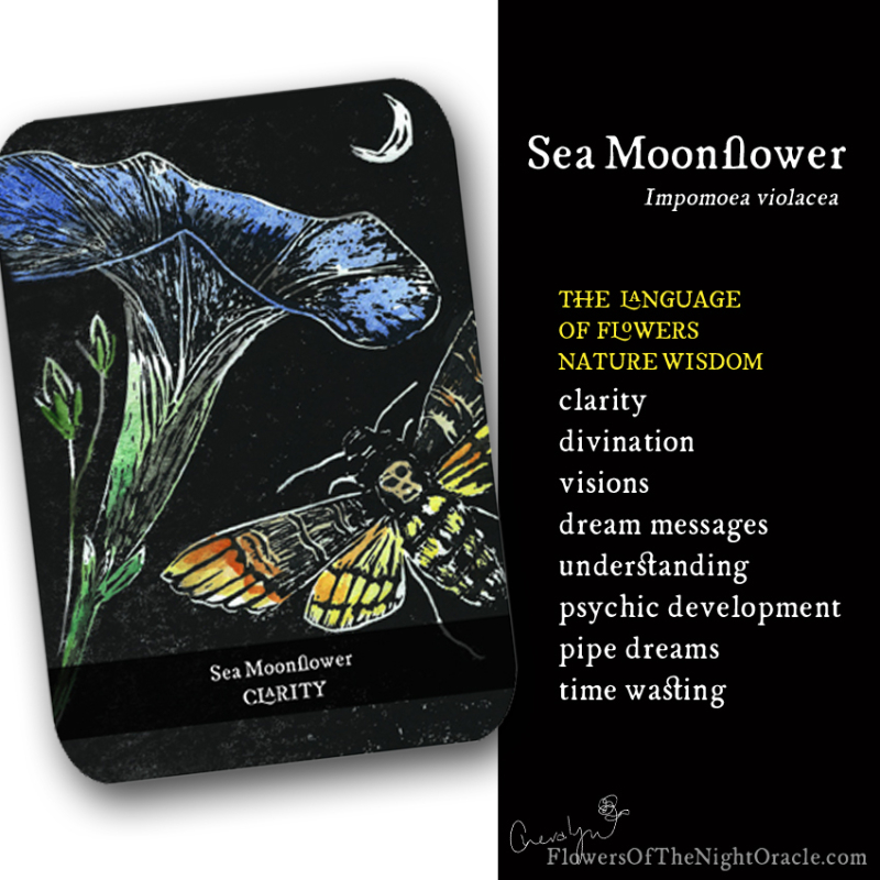 Night ecards Sea Moonflower 2