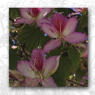 Fscope Butterfly Tree