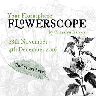 Flowerscope web 28th Nov