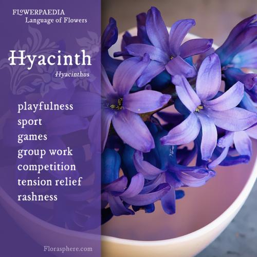 Hyacinth WEBCARD 3