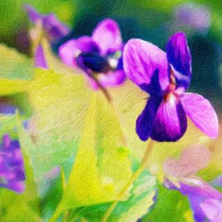 Sweet violets paint