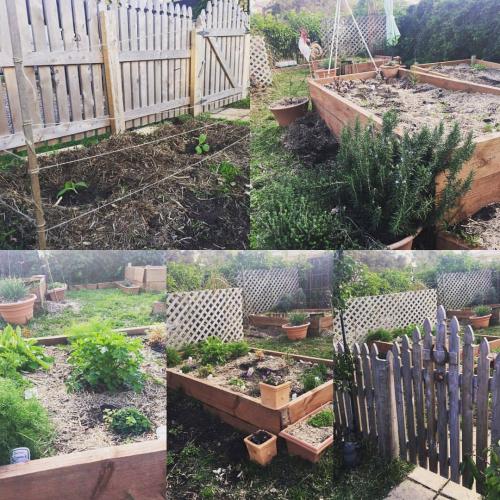 Garden sept