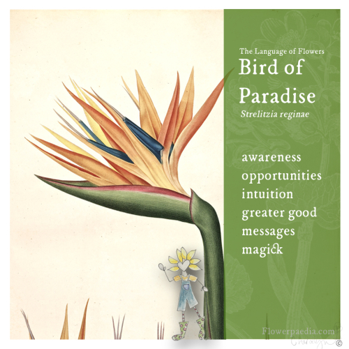 Bird of paradise webcards flora vintage new