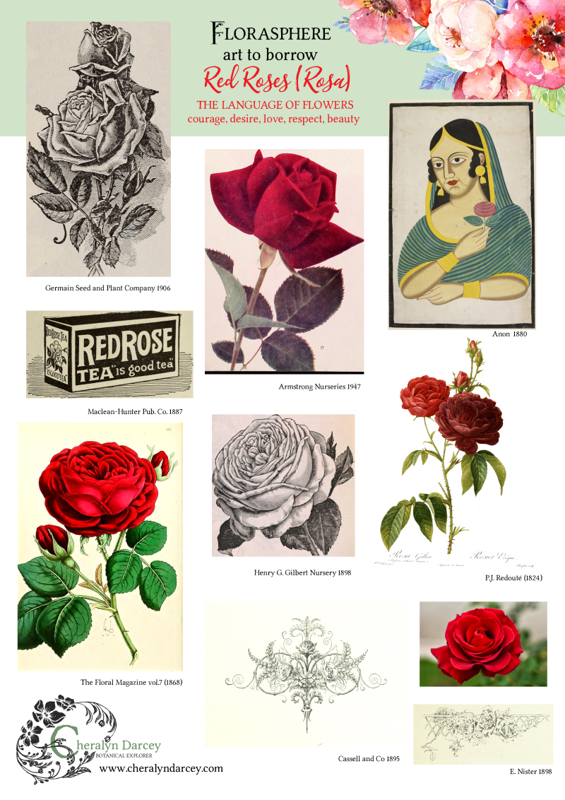 Florasphere art to borrow roses red