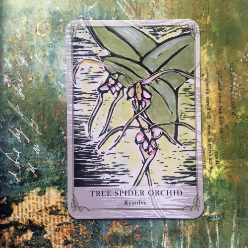 Tree spider orchid webcard