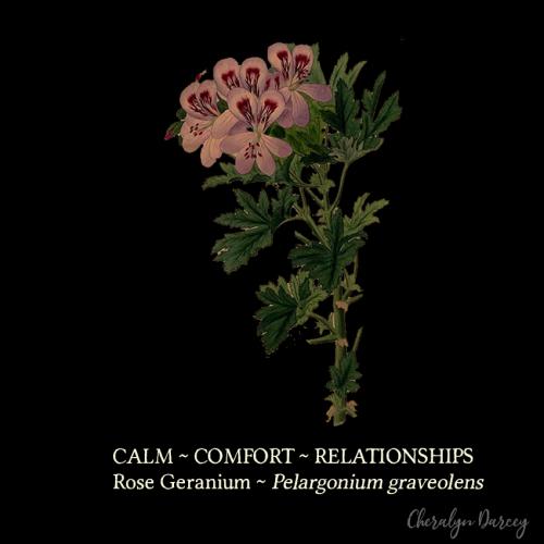 Rose geranium black card