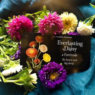 Everlasting daisy webcard