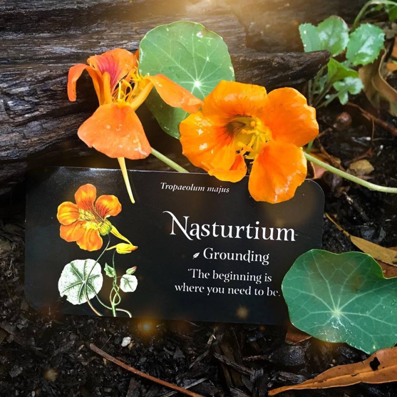 Nasturtium webcards