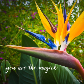 Bird of paradise webcards