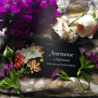 Anemone webcards