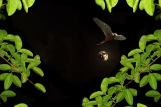 Moon-964210_1920