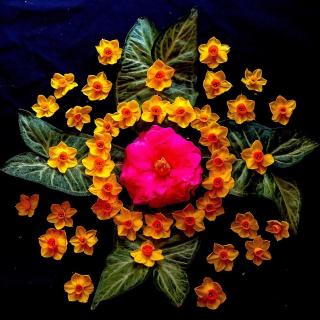 Grid Camellia Jonquil Arrowhead