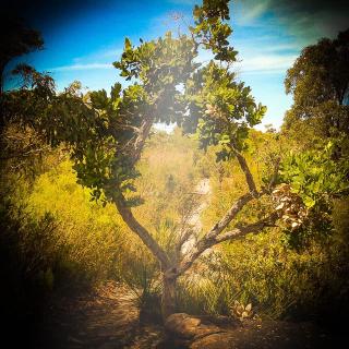Tree way