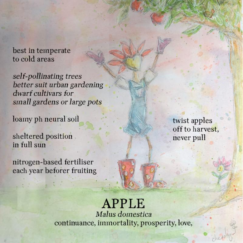 WEB Flora Grows Apples Cheralyn Darcey