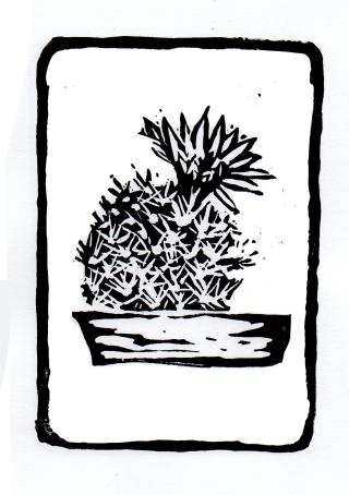 Silver Ball Cactus Cheralyn Darcey